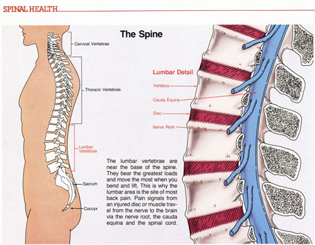 Spinal Health 2